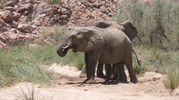 Thumbnail for Elephant pushing the other to leave a small waterhole