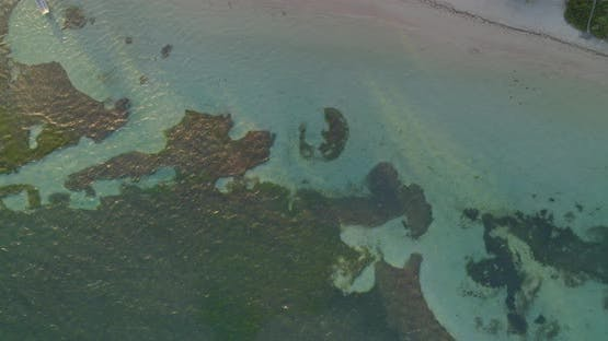 Aerial of palm trees and shallow turquoise sea water on sea coast