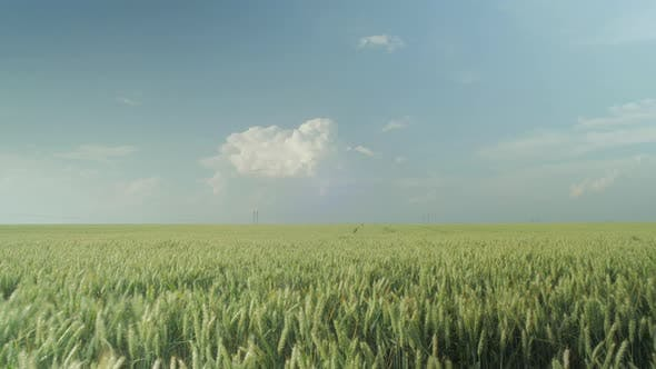 Thumbnail for Timelapse of a wheat field
