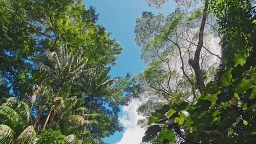 4K Rainforest