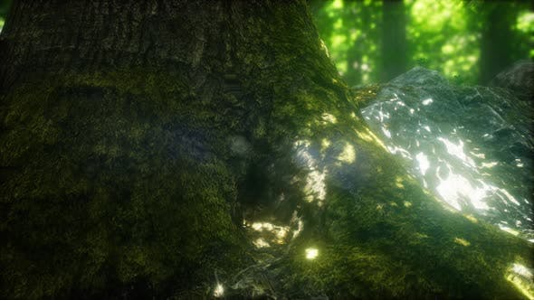 Thumbnail for Morning in the Misty Spring Forest with Sun Rays
