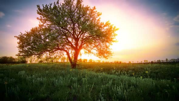 Thumbnail for summer landscape - sunset foliage sunlight