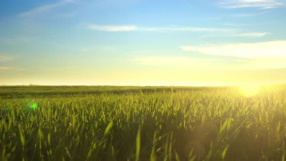 Cover Image for Green Grass Field At Sunset