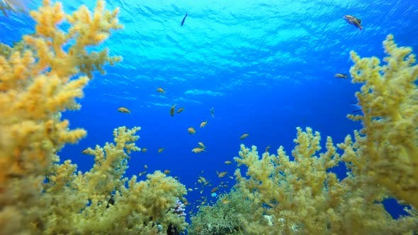 Tropical Underwater Reef