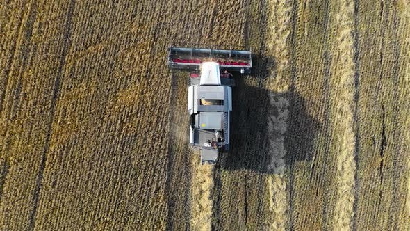 Thumbnail for Combine Harvester Working on the Field. During the Day. Aerial Shoot