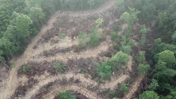 Thumbnail for Forest destruction in Malaysia