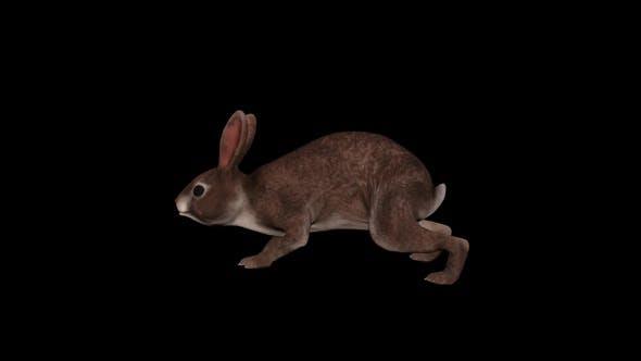 Thumbnail for Wild Rabbit Walk