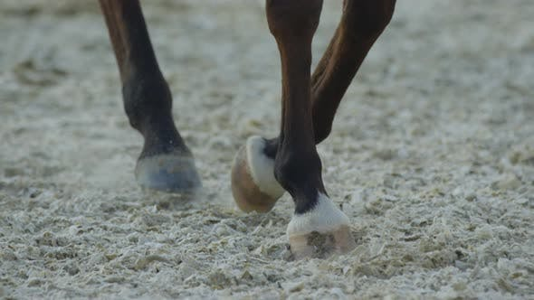Cover Image for Close up of horses legs walking