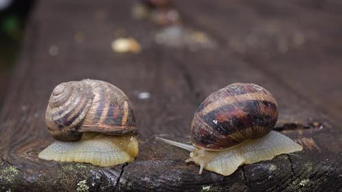 Couple of Snail Is Creeping