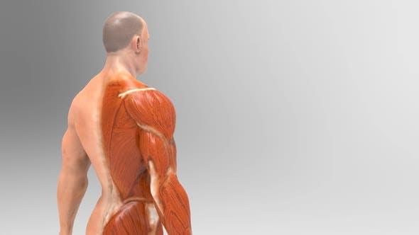 Thumbnail for Anatomy