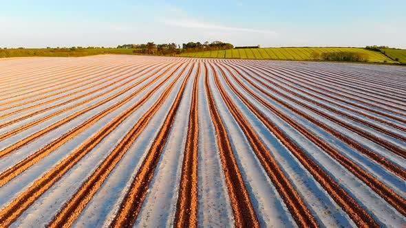 Furrows row pattern in a plowed field