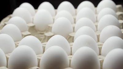 Hand takes white chicken egg. White chicken eggs in a carton.