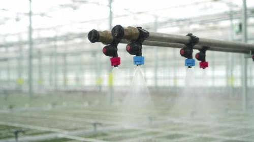 Closeup View of Watering of Green Plants at Hydroponic Greenhouse Indoors Spbd