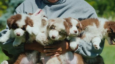A Man Holds Five Funny Puppies in His Arms