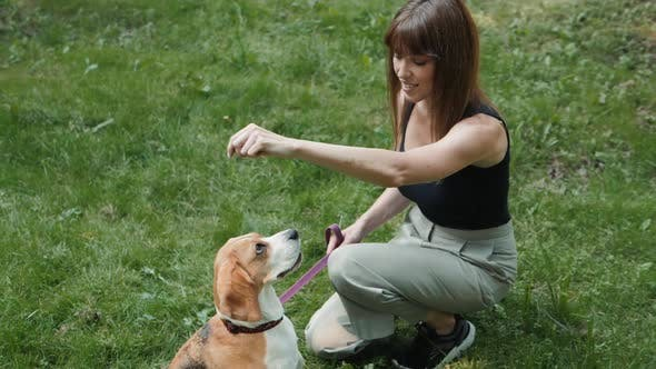 Dog Walker with Dogs Enjoying in Park. Professional Servise Training in Forest and City Streets