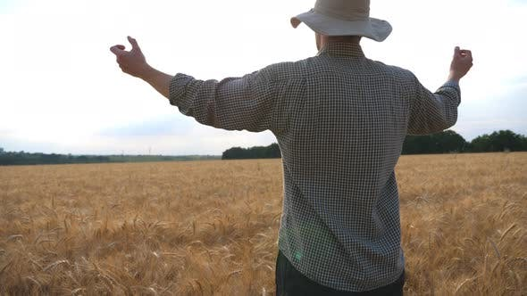 Thumbnail for Happy Young Farmer Standing on Ripe Wheat Field and Raising Hands on His Golden Plantation. Male