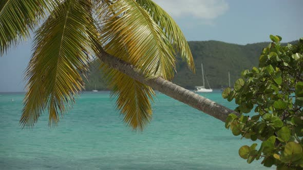 Thumbnail for Background Plate of Large palm tree in front of the blue Caribbean water