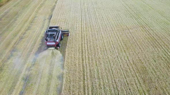 Aerial View of Modern Combine Harvesting Wheat on the Field. Flying Directly Above Combine. Top View