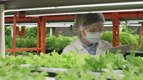 Agronomy Expert In Lab Coat Examining Seedlings