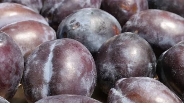 Thumbnail for Slow tilt on common  plum Prunus domestica  4K video