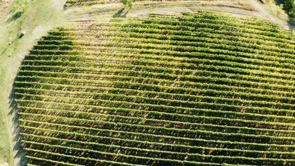 Thumbnail for Drone Aerial Shot of Big Vineyard