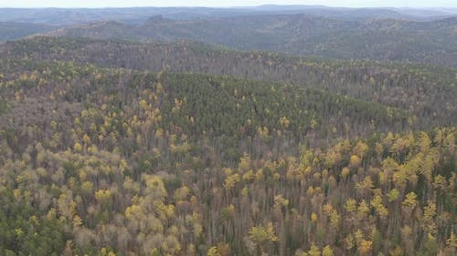 Aerial View of the Forest in the Mountains.