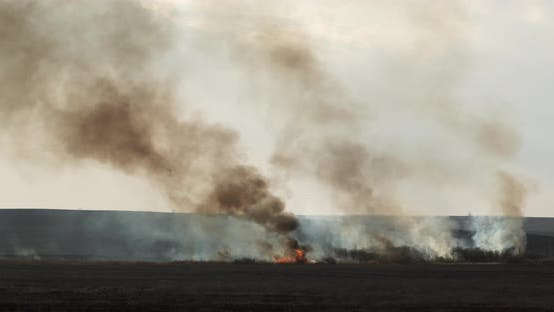 Dry Grass on Lanes and Forest in Fire, Firefighters at Work, Disaster, Ecological Catastrophe
