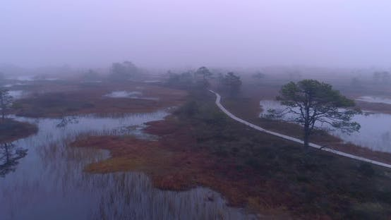 Thumbnail for Morning With Fog In Bog Before Sunrise