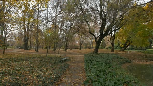 Cover Image for Alleys and trees in a park on an autumn day