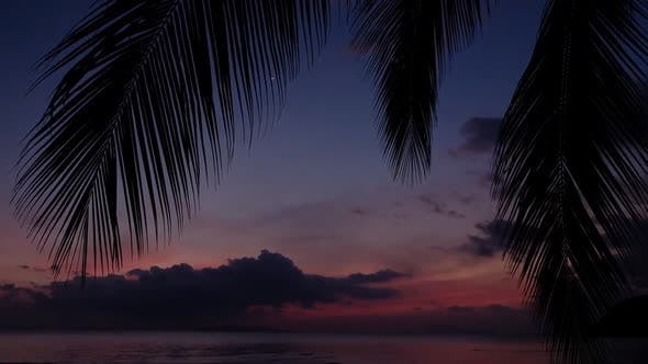 Thumbnail for Red Sunsets Over Sea. Silhouette of Palm Tree in the Foreground. Red Sky, Pink Sun and Amazing Sea
