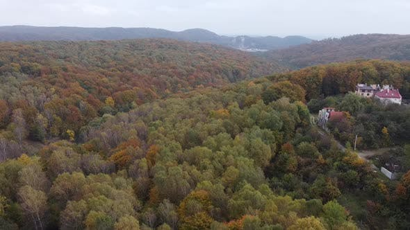 Thumbnail for Drone Flying Over the Forest 3