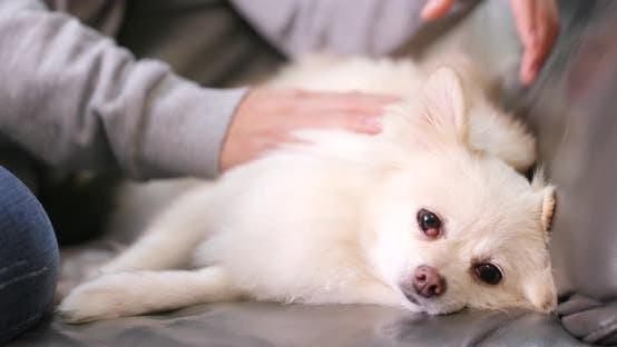 Thumbnail for Woman Massaging White Dog