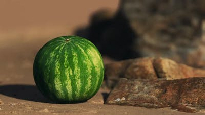 Big and Juicy Watermelon on the Beach Sand