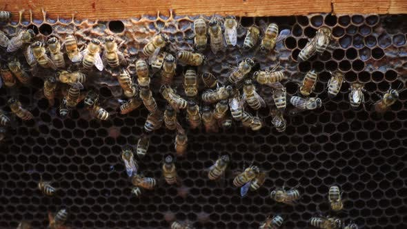 Cover Image for Bees At The Beehive 5