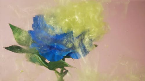Yellow Cloud of Fairy Dust Falls on Blue Rose and Swirls Around