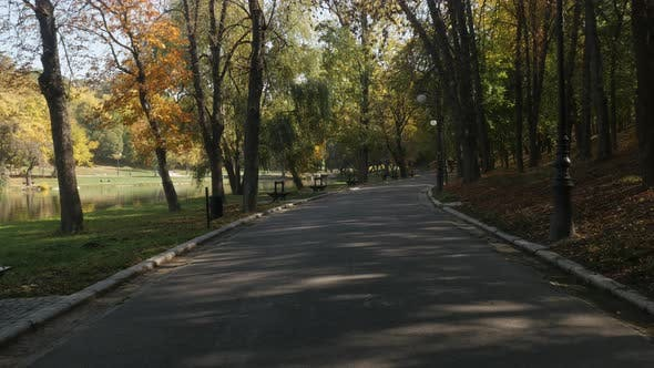 Thumbnail for Beautiful  colors of nature in the park 3840X2160 UltraHD  footage - Tree alley by autumn in Craiova