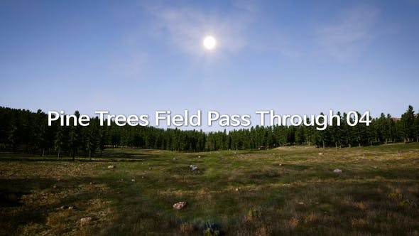 Pine Trees Field Pass Through 04