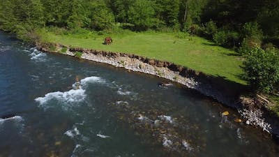 Horses Graze By The River