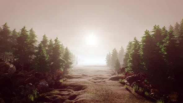 Passing Through Forest Path 4K 04