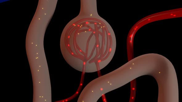 Cover Image for Function Of Nephron In Kidney