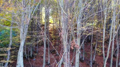 Dry Branches and Leaves in Natural Autumn Forest
