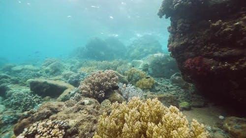 Stunning Underwater View of Marine Species Biodiversity.