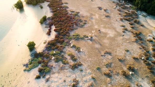 Vue aérienne des oiseaux d'eau debout sur la plage, Émirats arabes unis