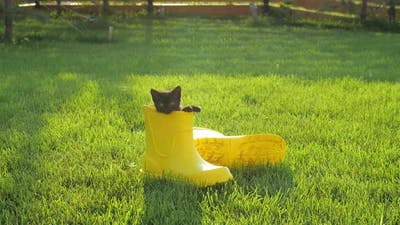Cute Kitten in a Yellow Boot on the Lawn