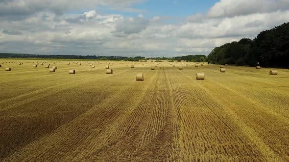 Hay Bales On The Field. Golden hay bales in the countryside