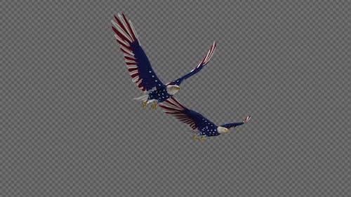 USA Eagles - 2 Birds - Flying Loop - Side Angle 4K