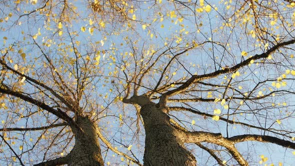 Cover Image for Trees With Autumn Leaves