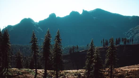 Bäume auf der Wiese zwischen Hängen mit Nadelwald