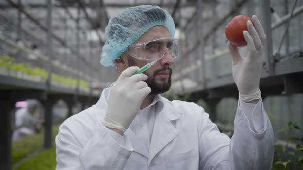 Thumbnail for Close-up of Confident Young Handsome Man Making Injection To Tomato. Caucasian Male Scientist