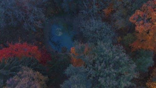 Angst und Spannung im Wald an der Halloween-Nacht